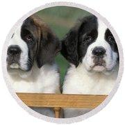 St. Bernard Puppies Round Beach Towel