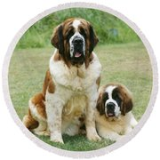 St Bernard With Puppy Round Beach Towel