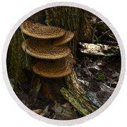 Stack Of Fungi Round Beach Towel