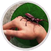 Stag Beetle On Hand Round Beach Towel by Daniel Eskridge