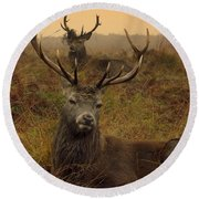 Williams Fine Art Stag Party The Series  Round Beach Towel