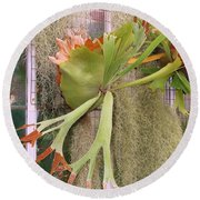 Staghorn Fern Round Beach Towel