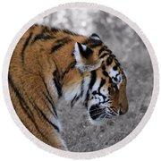 Stalking Tiger Round Beach Towel