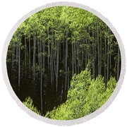 Stand Of Birch Trees New Growth Spring Rich Green Leaves Round Beach Towel
