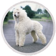 Standard Poodle Dog, Unclipped Round Beach Towel