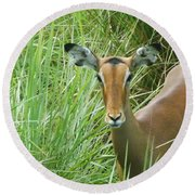 Standing In The Grass Impala Antelope  Round Beach Towel