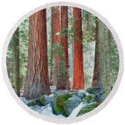 Standing Tall - Sequoia National Park Round Beach Towel