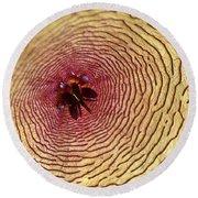 Stapelia Grandiflora - Close Up Round Beach Towel