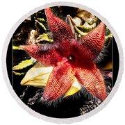 Stapelia Grandiflora Starfish Cactus Round Beach Towel