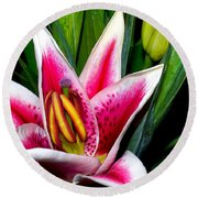 Star Gazer Lily Round Beach Towel
