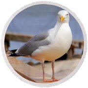 Stare Of A Seagull Round Beach Towel