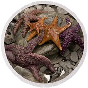 Starfish 2 Round Beach Towel