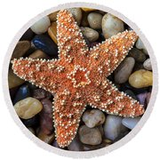 Starfish On Rocks Round Beach Towel