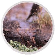 Starlings Fight Round Beach Towel