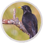 Starlings Round Beach Towel