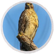 Stately Red-shouldered Hawk Round Beach Towel