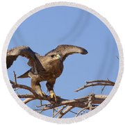 Steppe Eagle Aquila Nipalensis 1 Round Beach Towel