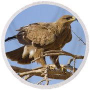 Steppe Eagle Aquila Nipalensis 2 Round Beach Towel