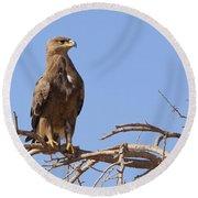 Steppe Eagle Aquila Nipalensis Round Beach Towel
