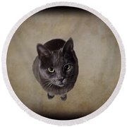 Sterling The Cat Round Beach Towel