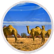 Stop And Stare V2 Round Beach Towel