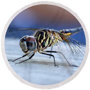 Stop By Tiger Dragon Fly Round Beach Towel by Peggy Franz