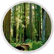Stout Grove Coastal Redwoods Round Beach Towel