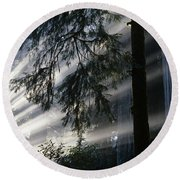 Stout Grove Redwoods With Sunrays Breaking Through Fog Round Beach Towel