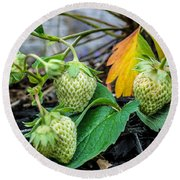 Strawberries - Soon To Be Picked Round Beach Towel
