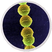 Streptococcus Bacteria Sem Round Beach Towel by Science Source