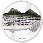 Striped Bass Round Beach Towel by Charles Harden