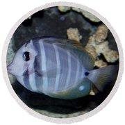 Striped Fish Round Beach Towel