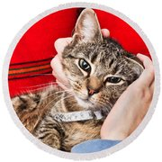 Stroking A Cat Round Beach Towel by Tom Gowanlock