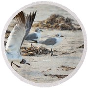 Strutting Seagull On The Beach Round Beach Towel
