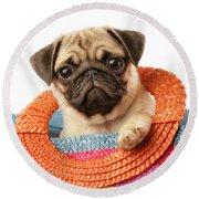Stuck Pug Round Beach Towel by Greg Cuddiford