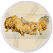 Study For Daniel In The Lions Den Round Beach Towel