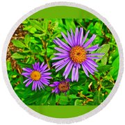 Subalpine Daisy By Vidae Falls In Crater Lake National Park-oregon  Round Beach Towel