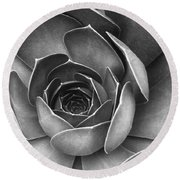 Succulent In Black And White Round Beach Towel