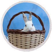 sugar the easter bunny 4 - A curious and cute white rabbit in a hand basket  Round Beach Towel