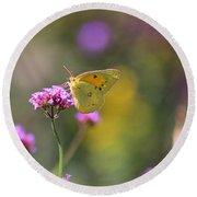 Sulphur Butterfly On Verbena Flower Round Beach Towel