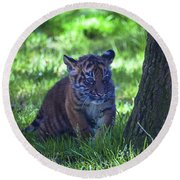 Sumatran Tiger Cub Round Beach Towel