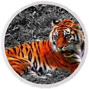 Sumatran Tiger Round Beach Towel