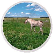Summer Colt Round Beach Towel