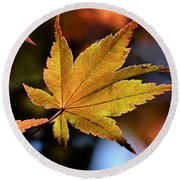 Summer Japanese Maple - 2 Round Beach Towel