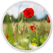 Summer Meadow With Red Poppy Round Beach Towel