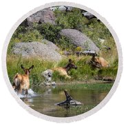 Summer Morning Dip - Elk In Yellowstone National Park - Wyoming Round Beach Towel