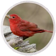 Summer Tanager Round Beach Towel