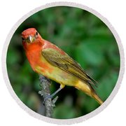 Summer Tanager Changing Color Round Beach Towel