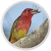 Summer Tanager Eating Wasp Round Beach Towel