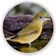 Summer Tanager Female In Water Round Beach Towel